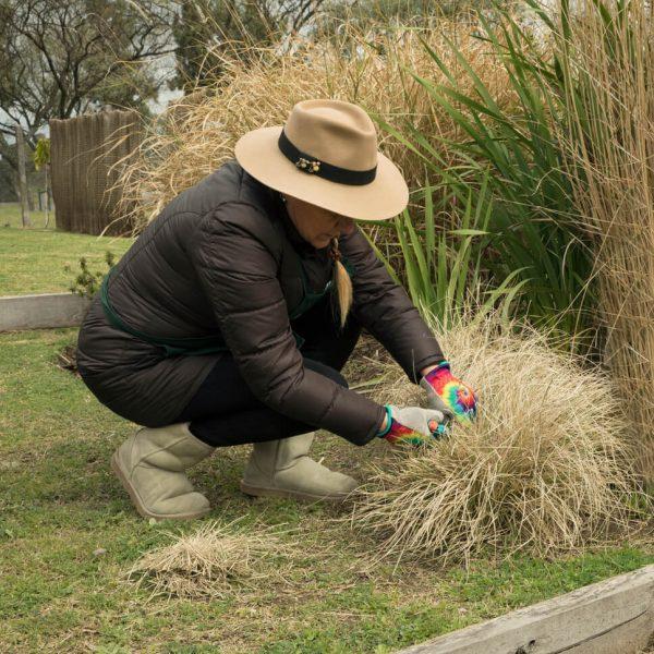 Strihanie okrasných tráv na jar či jeseň Krásna Záhrada