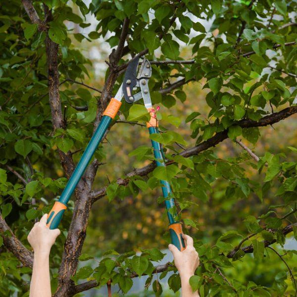 Strihanie stromov Bratislava Krásna Záhrada