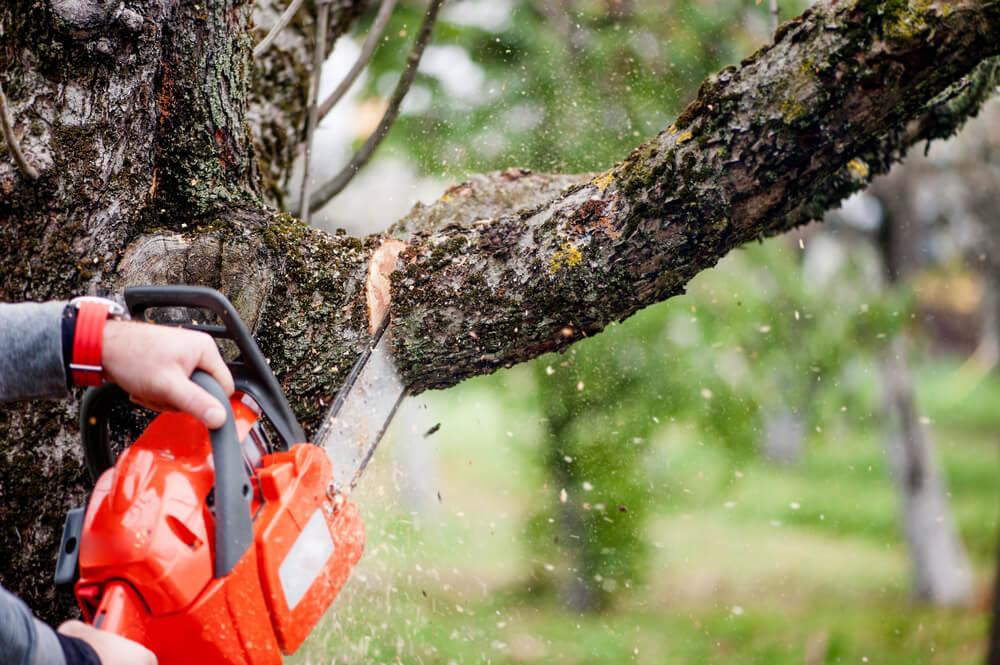 Pílenie stromov Nitra Krásna Záhrada