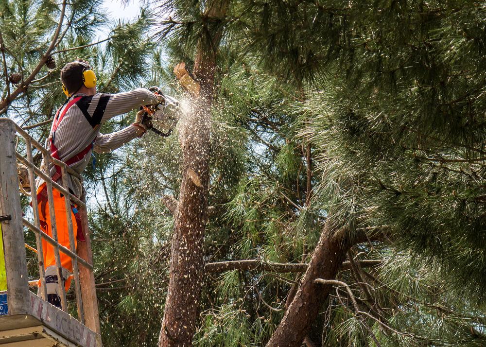 Rizikové pílenie stromov Bratislava Krásna Záhrada