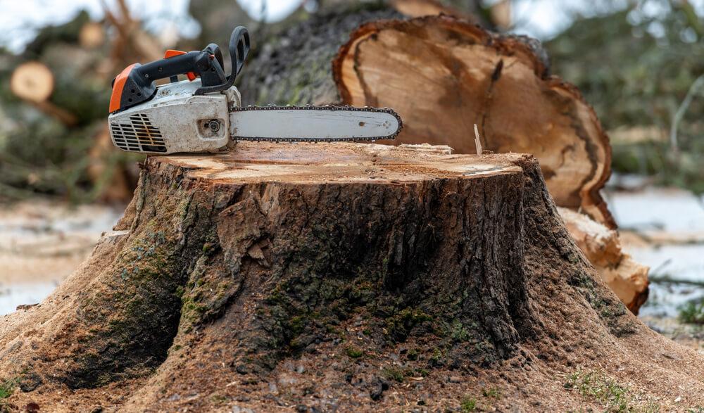 Výrub stromov Nitra Krásna Záhrada